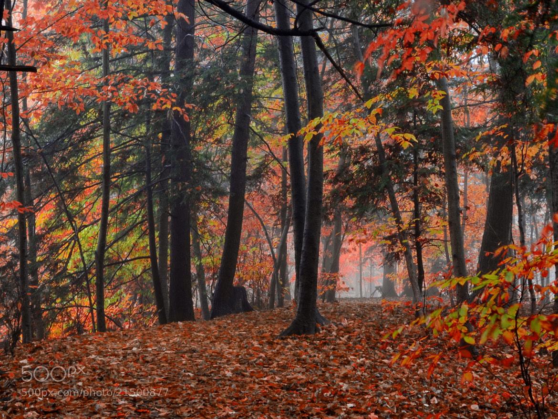 Photograph fuzzy end by Andrzej Pradzynski on 500px