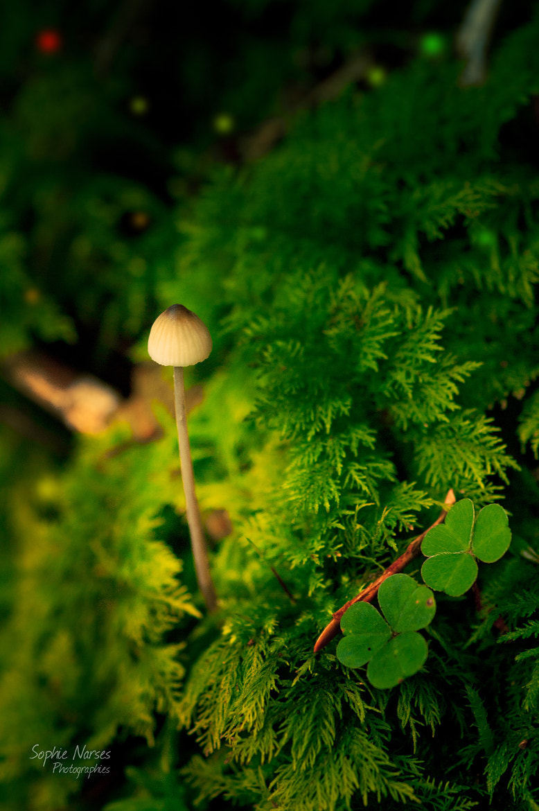 Photograph Magic mushroom by Sophie Narses on 500px