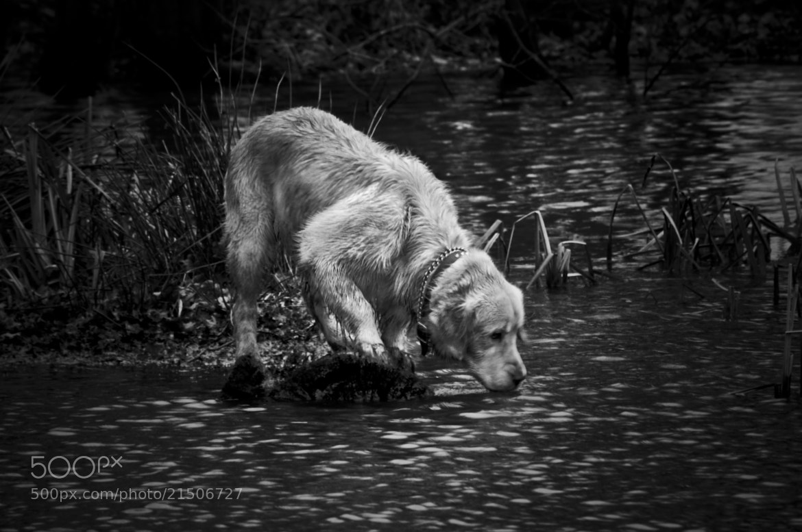 Photograph Pet in pond by Kol Tregaskes on 500px