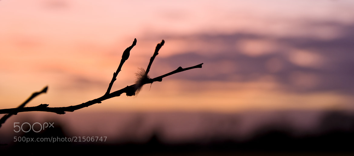 Photograph Twig at dusk by Kol Tregaskes on 500px