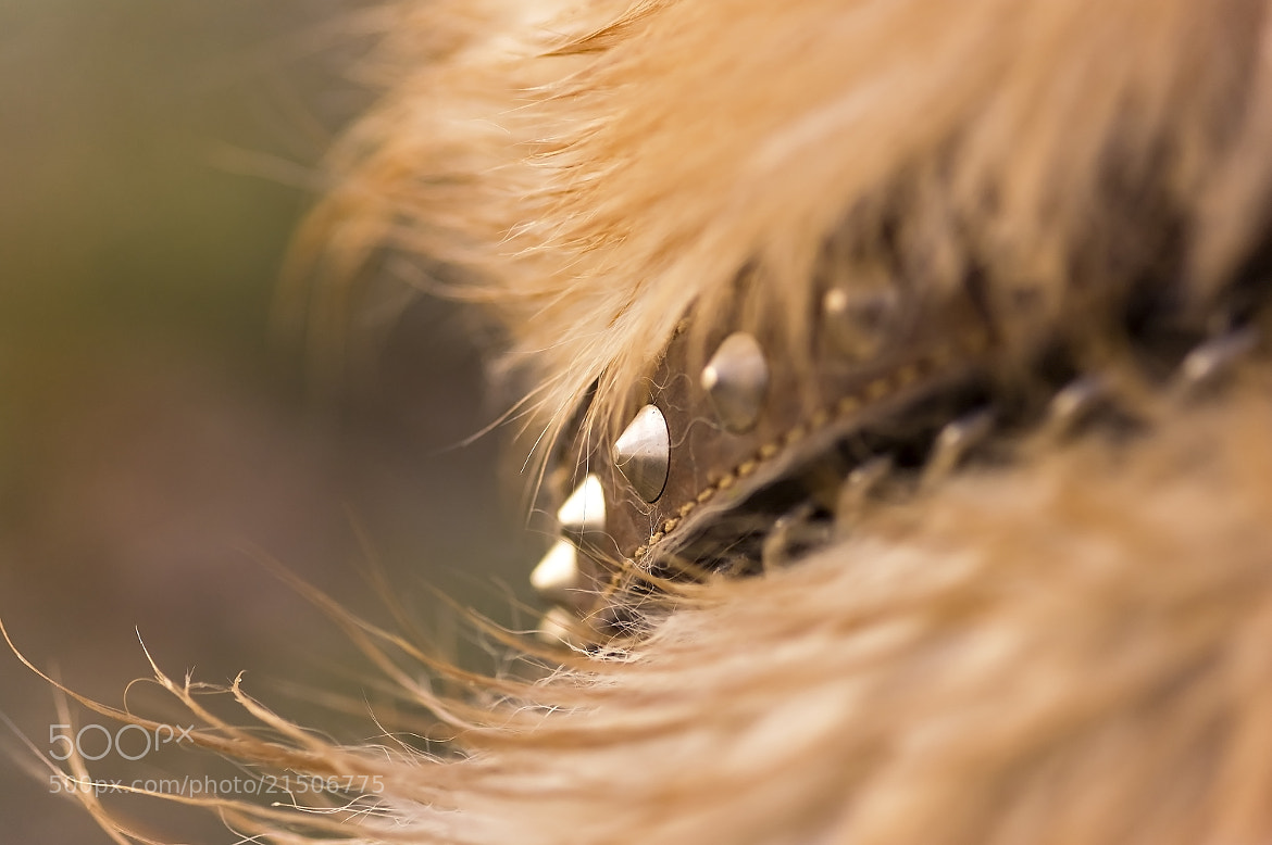 Photograph Dog collar by Kol Tregaskes on 500px
