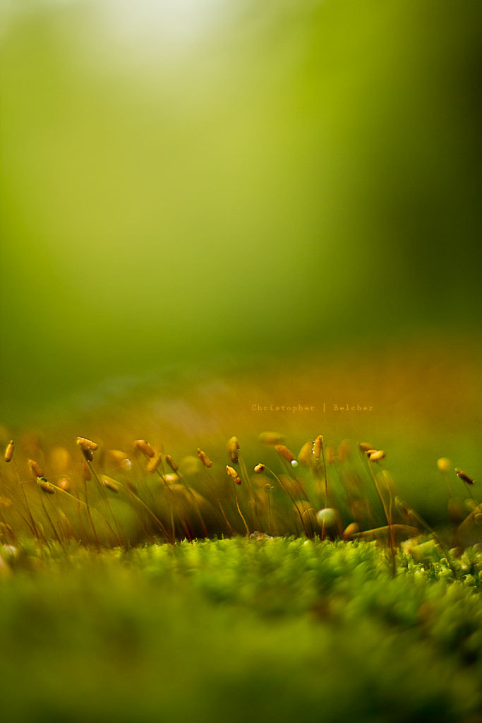 Photograph Moss Sprouts by Chris Belcher on 500px