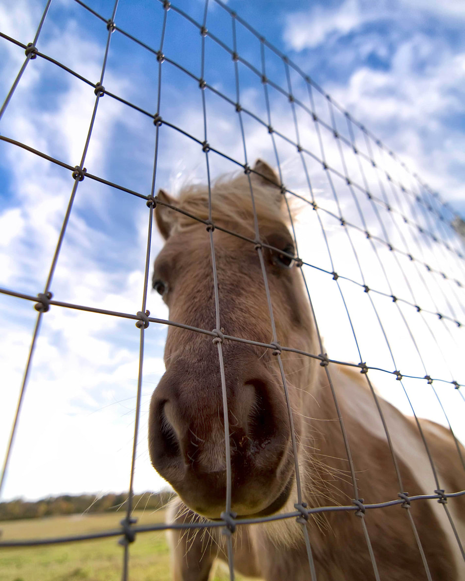 Photograph Curious Christmas Donkey by AustinPixels   on 500px