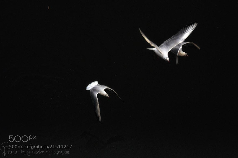 Photograph Birds of Prague II by Kate Eleanor Rassia on 500px