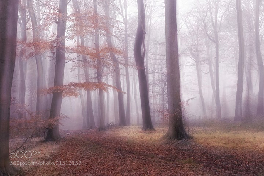 Photograph Foggy Woodlands by Ceri Jones on 500px