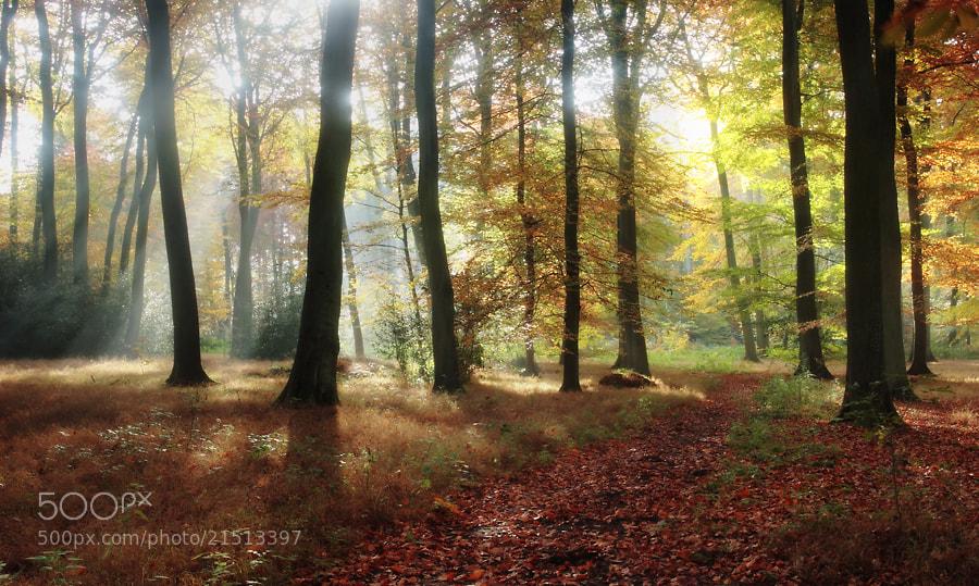 Photograph Autumn Morning Light by Ceri Jones on 500px