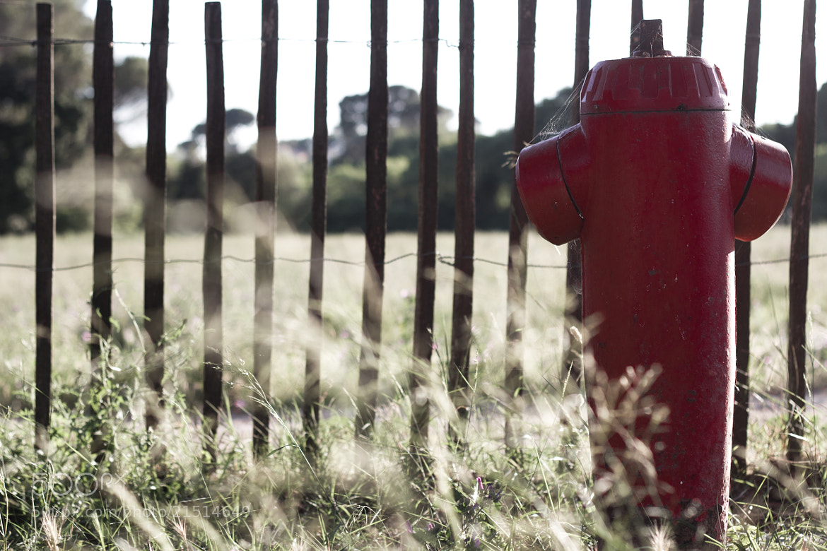 Photograph Lonely Fire Hydrant by Thibault Casano on 500px