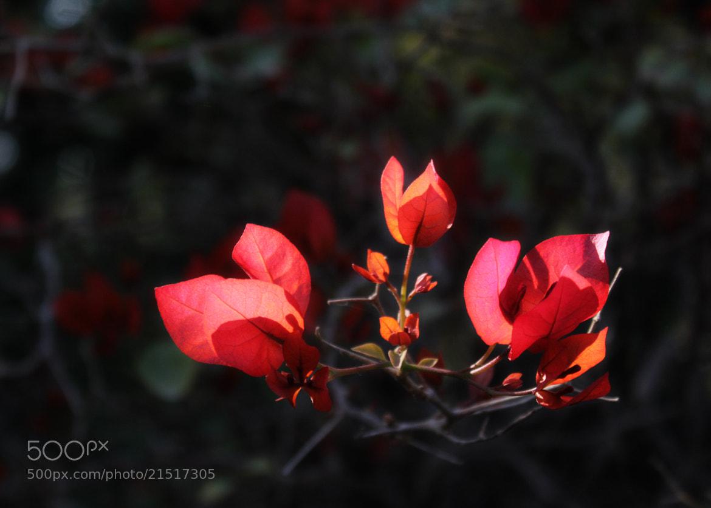 Photograph Happy morning by Subhash Masih on 500px