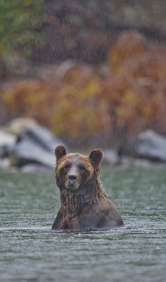 Photograph Grizzly Day for Fishing by Dan Newcomb on 500px