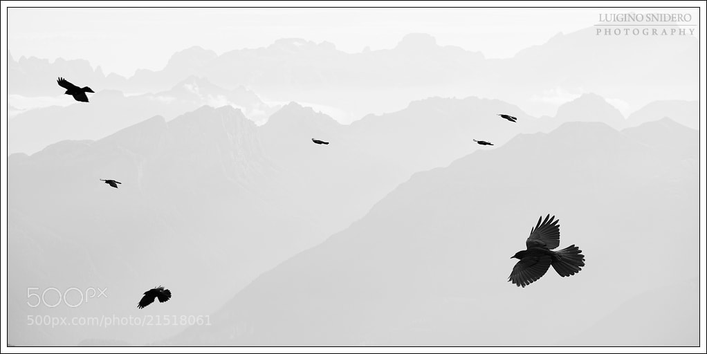 Photograph Crows by Luigino Snidero on 500px