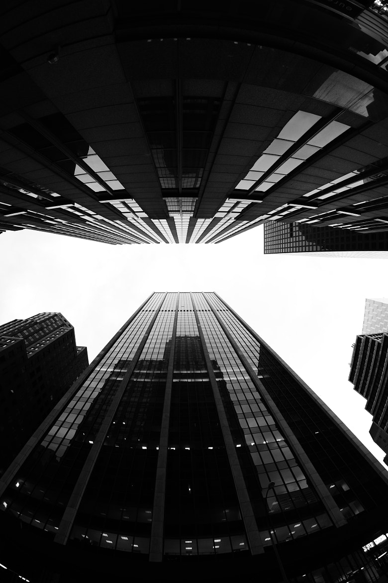 Photograph Looking Up by Sam Commarato on 500px