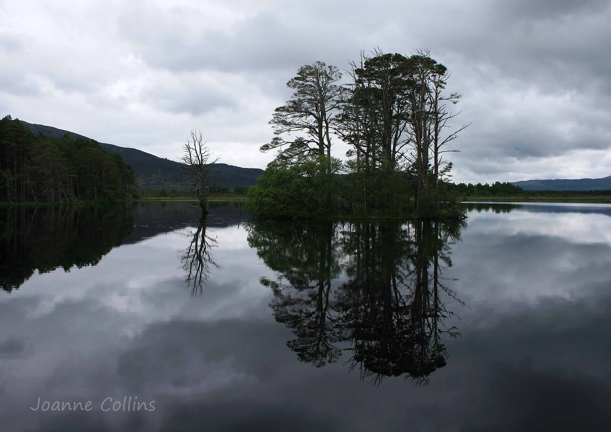 Photograph Reflections of Pines by Jo  Collins on 500px