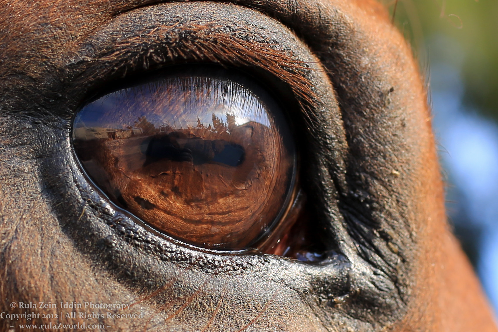 Photograph Window to the Soul by Rula Zein-Iddin on 500px