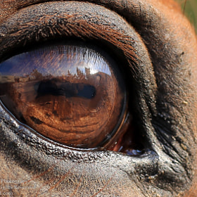 Window to the Soul by Rula Zein-Iddin on 500px.com