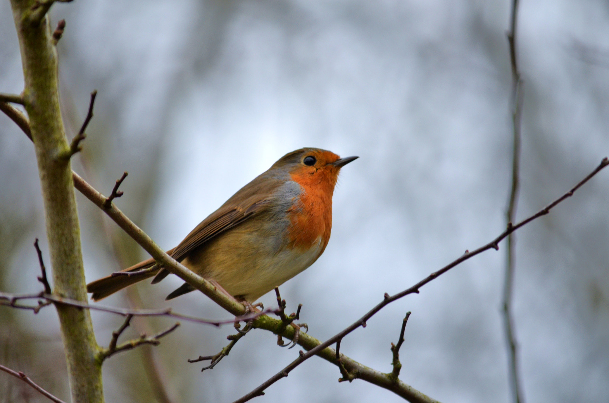 Photograph Robin by Chris Hill on 500px