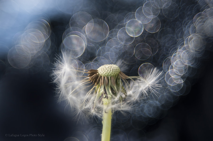 Nature Photo The ode of departure by nature photographer Lafugue Logos on 500px.com