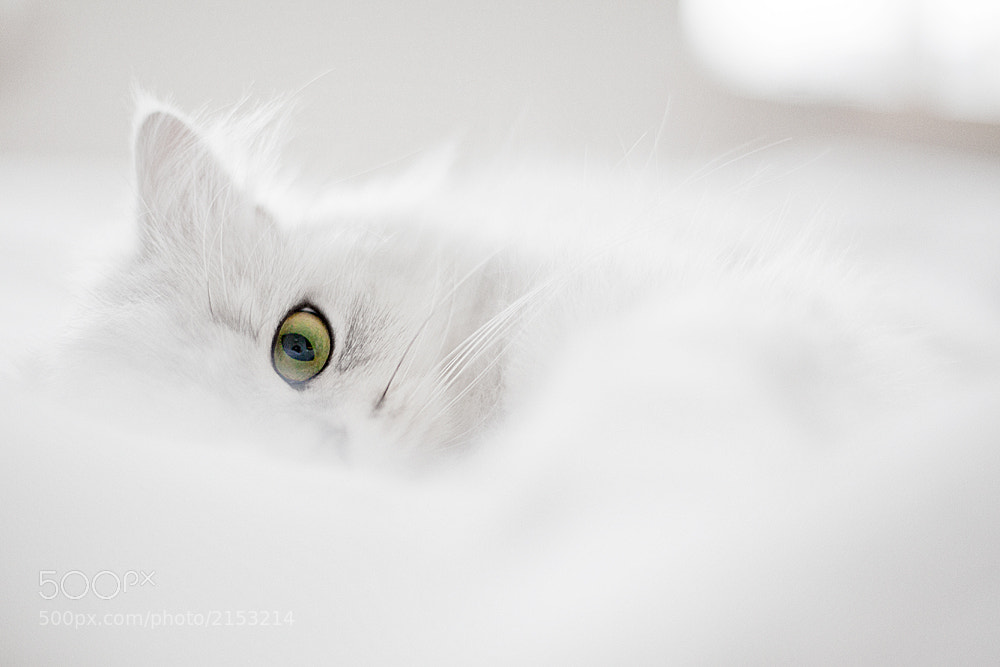 Photograph Green Eye by Eliane Zwimpfer on 500px