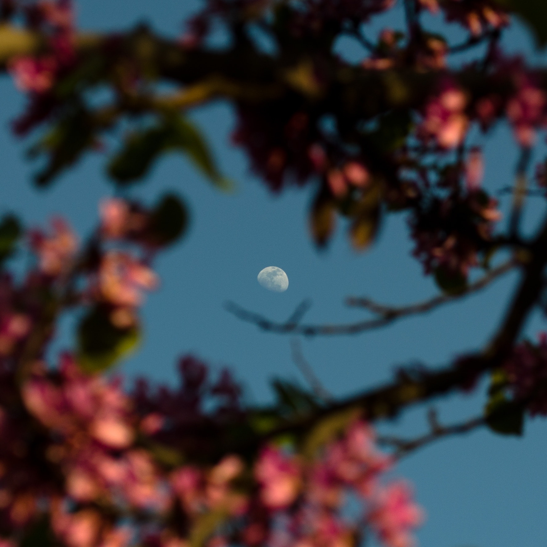 Photograph Moon during the spring day by Denys Tsutsayev (Lisovyk) on 500px
