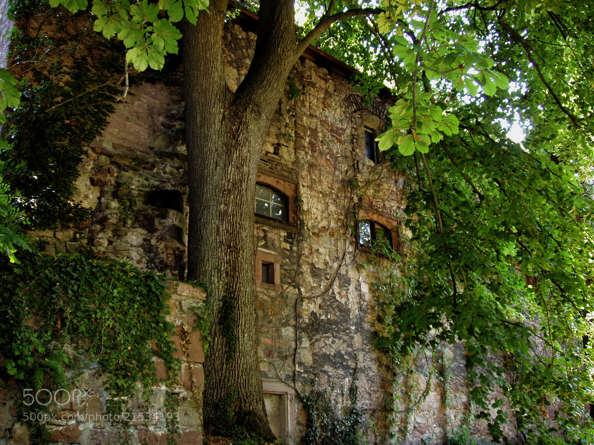 Photograph Neues Schloss 2 by Michael Card on 500px