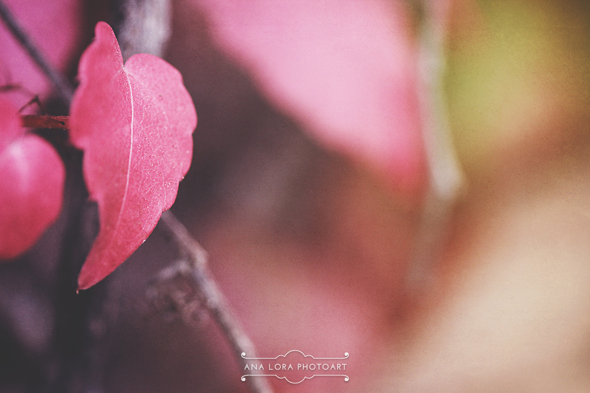Photograph Colors of Autumn by Ana Lora Photoart on 500px