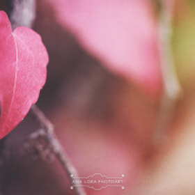 Colors of Autumn by Ana Lora Photoart (analora)) on 500px.com