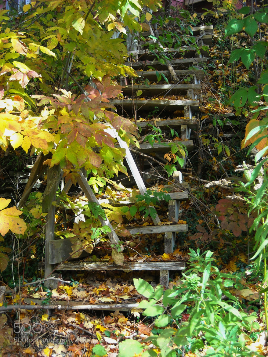Photograph Old Stairs by Michael Card on 500px
