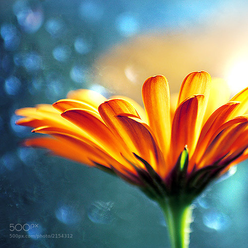 Yellow flower in blue background