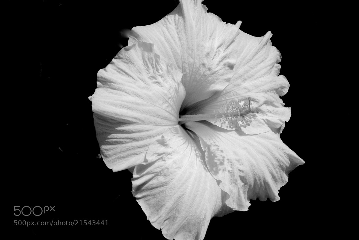 Photograph Stripped Black by Julian Carstairs on 500px