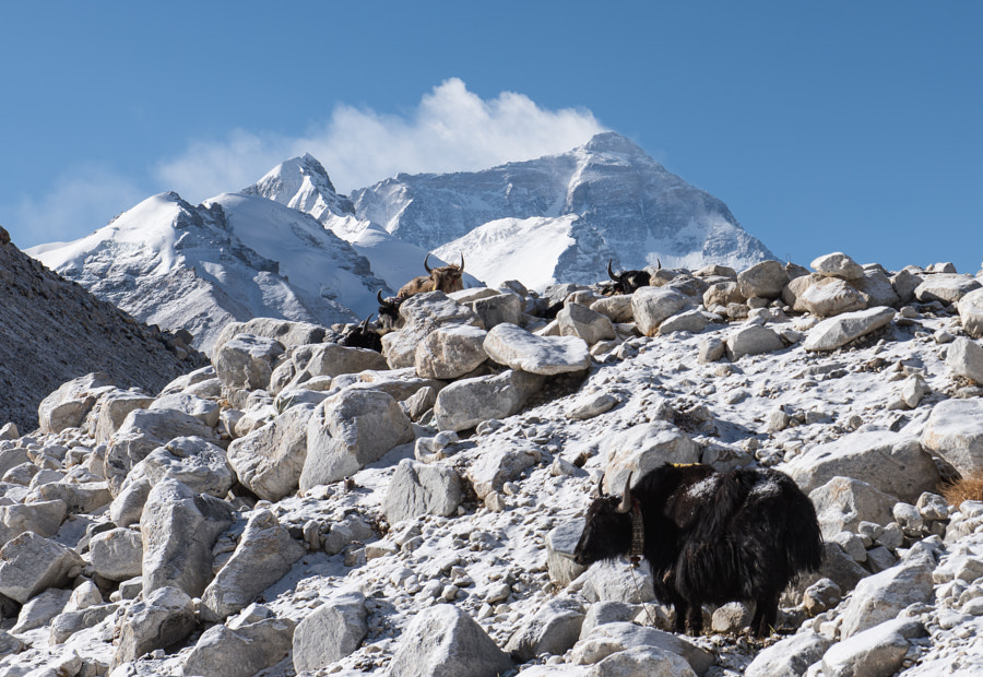 Everest & Friends by Matt MacDonald on 500px.com