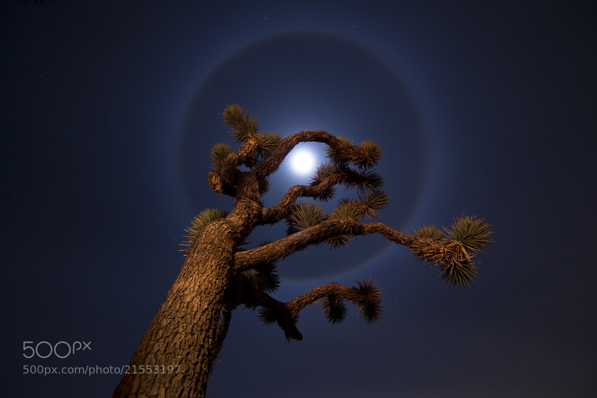 Photograph Winter Solstice Lunar Halo by Lance Page on 500px