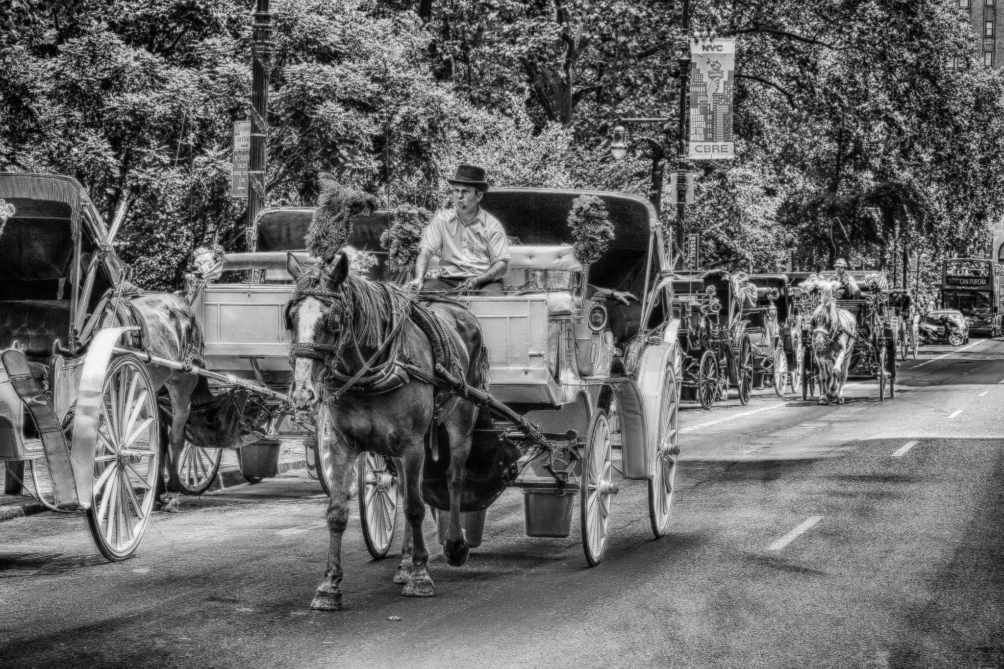 Photograph Central Park Horses by Pete  on 500px