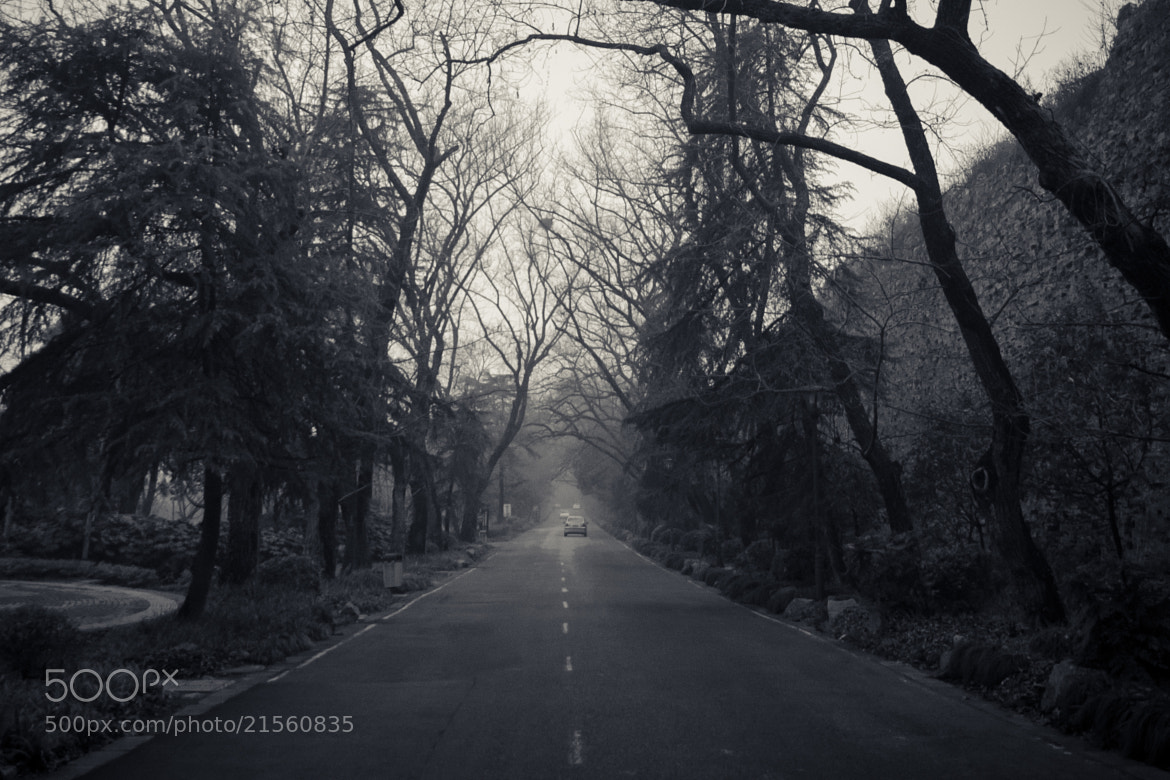 Photograph Endless road by Soleil Neon on 500px