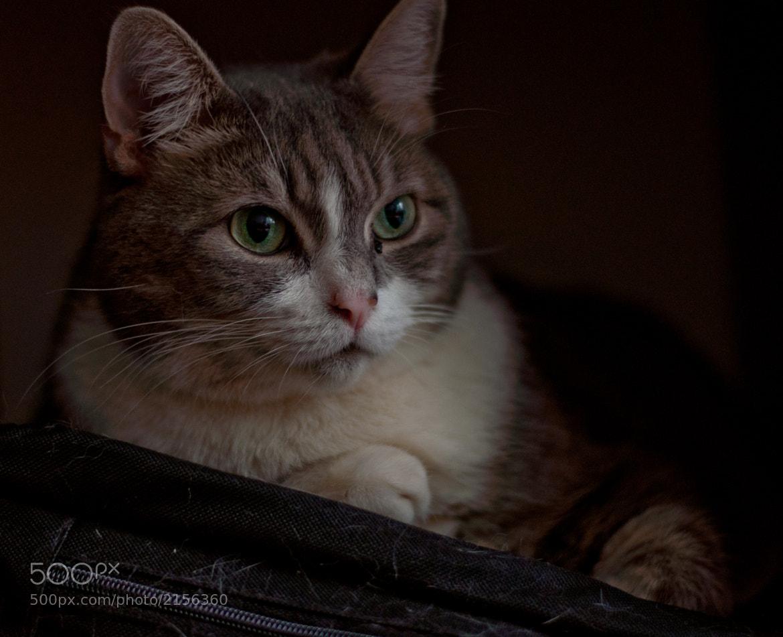 Photograph Sunday Fat Cat by Kurt Nelson on 500px
