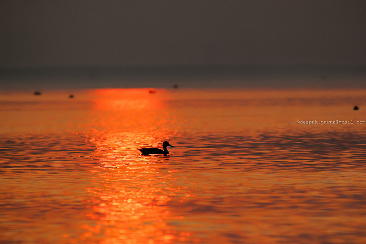Photograph Looking for some fish ... by Deepak Pawar on 500px