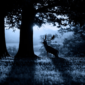 moonrise by Mark Bridger (bridgephotography)) on 500px.com