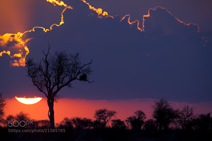 Photograph Sunset in Kruger by Mario Moreno on 500px