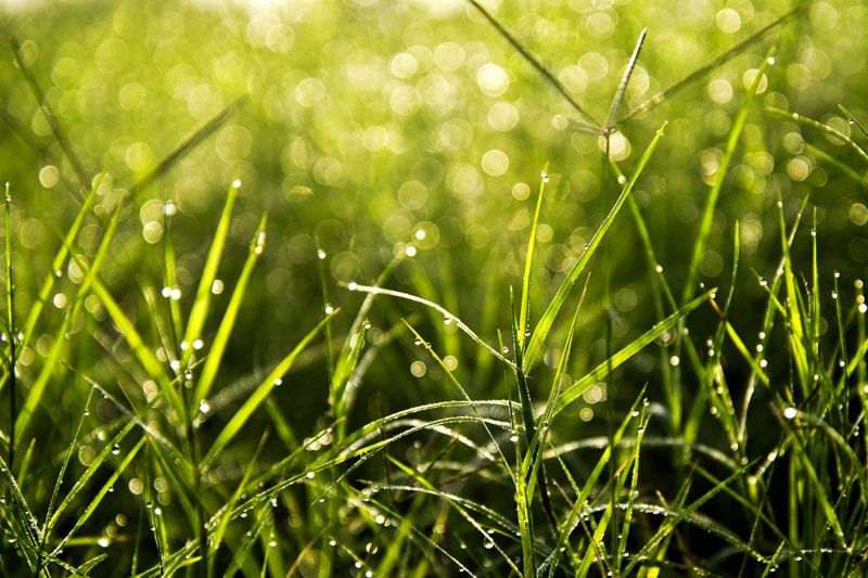Photograph It's only grass by Vien Dong on 500px