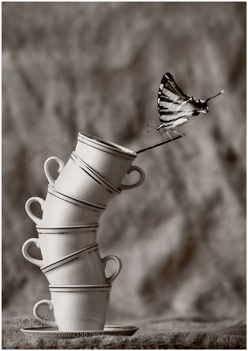 Photograph a delicate balance by Sergey Kuranov on 500px