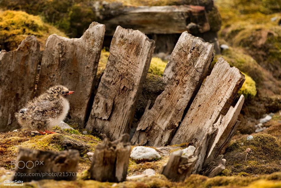 Photograph A Little Stuck by Roie Galitz on 500px