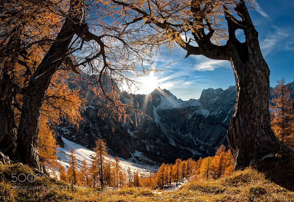 Photograph In the land of larch by Aleš Komovec on 500px