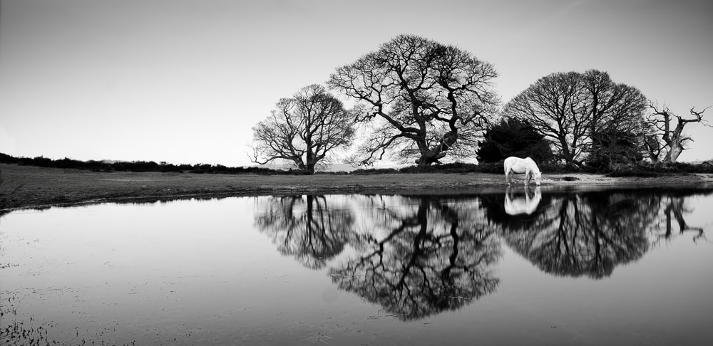 Photograph Those Trees by Cathy Taylor on 500px