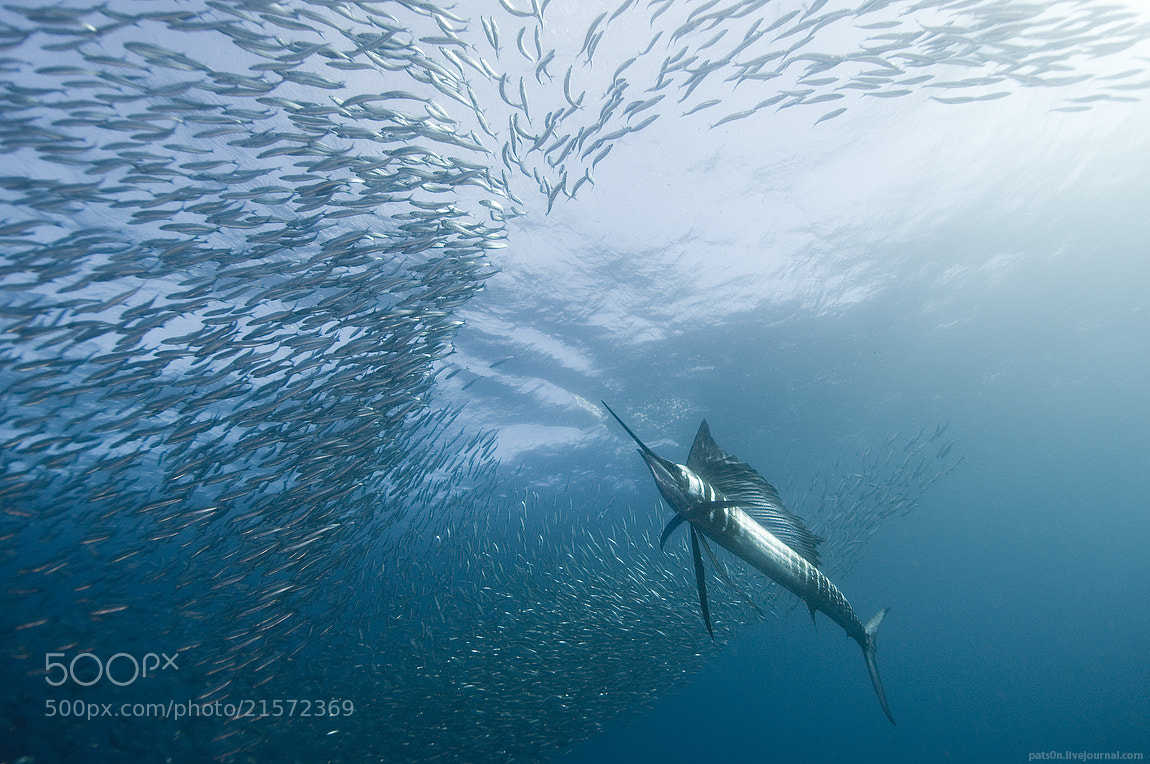 Photograph the great hunt by Alexander Safonov on 500px