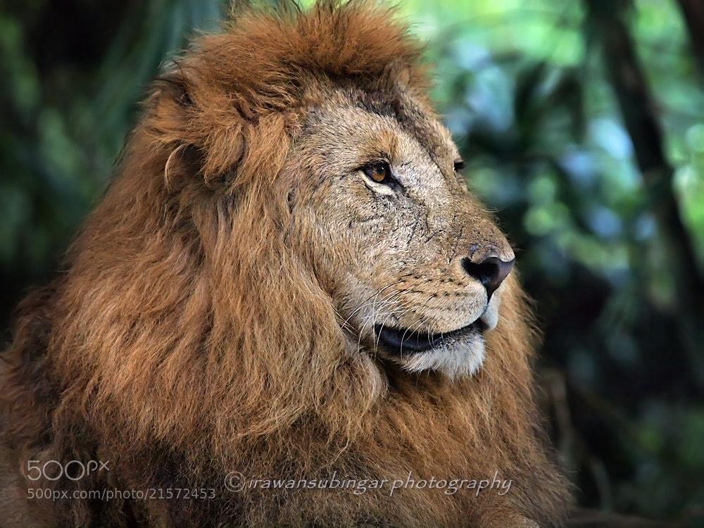 Photograph scarface by Irawan Subingar on 500px