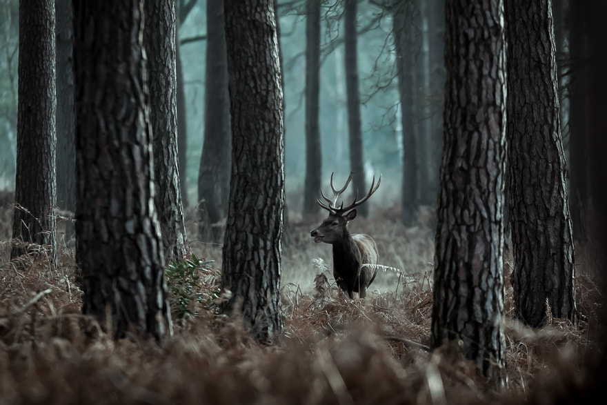 Photograph Welcome in winter by Nicolas Le Boulanger on 500px