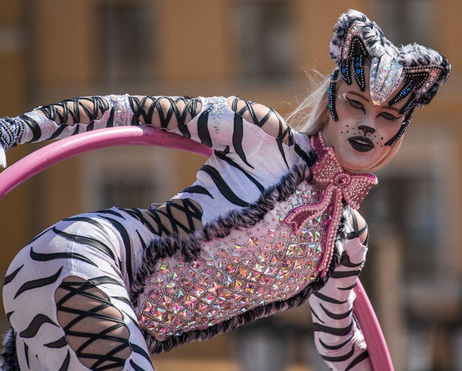 Samba cat