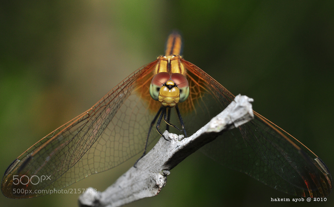 Photograph dragonfly by hakeim ayob on 500px