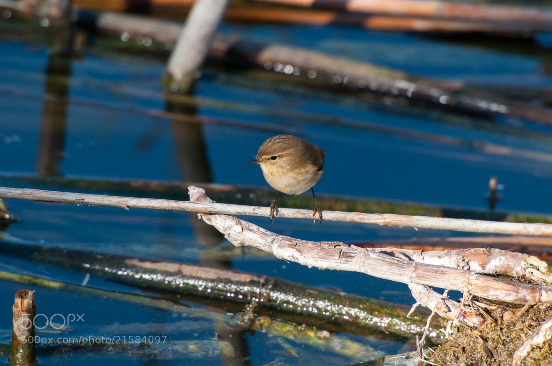 Photograph Birdie by Carlo Murenu on 500px
