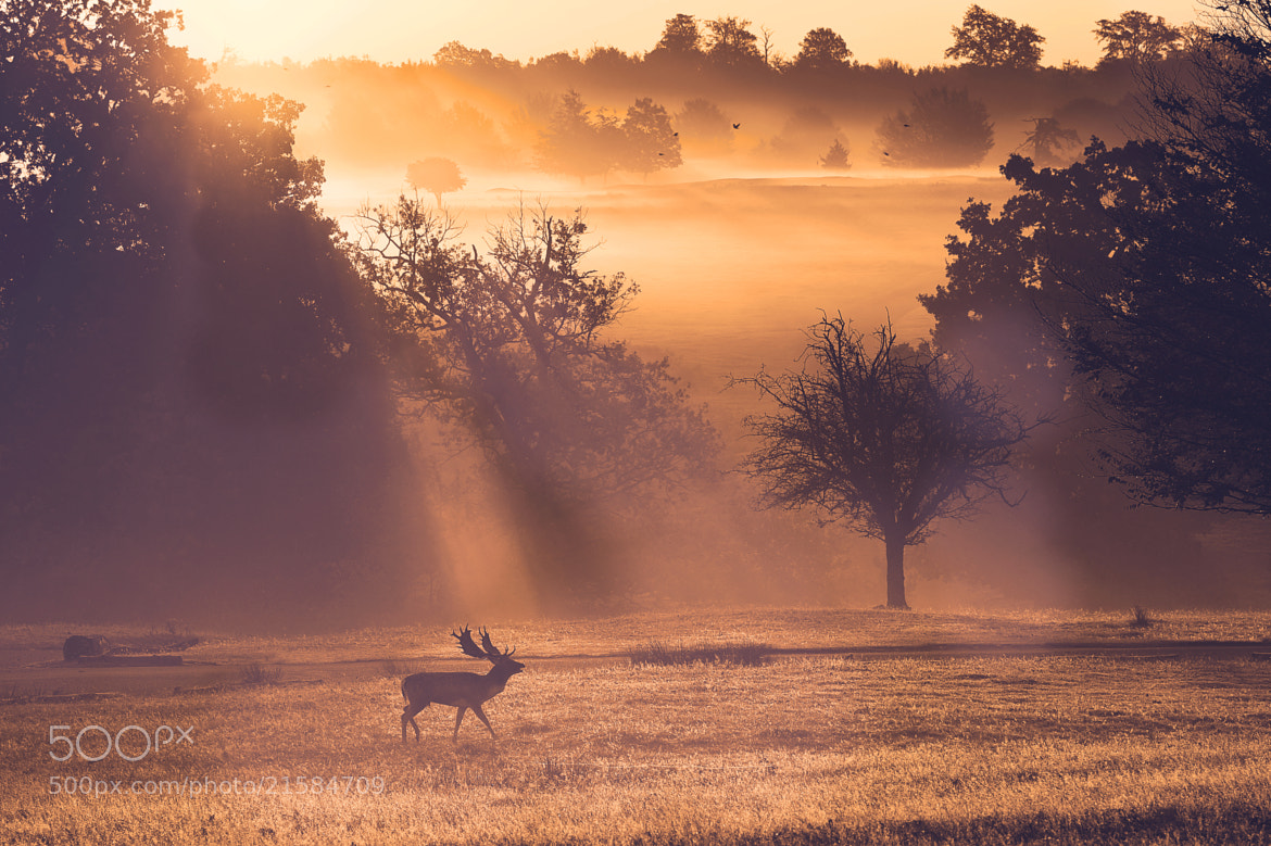 Photograph a walk in the park by Mark Bridger on 500px