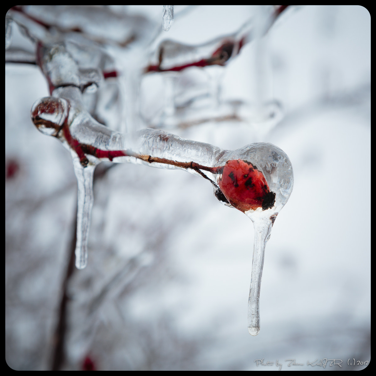 Photograph Ice grip (7) by Zdeno Kajzr on 500px