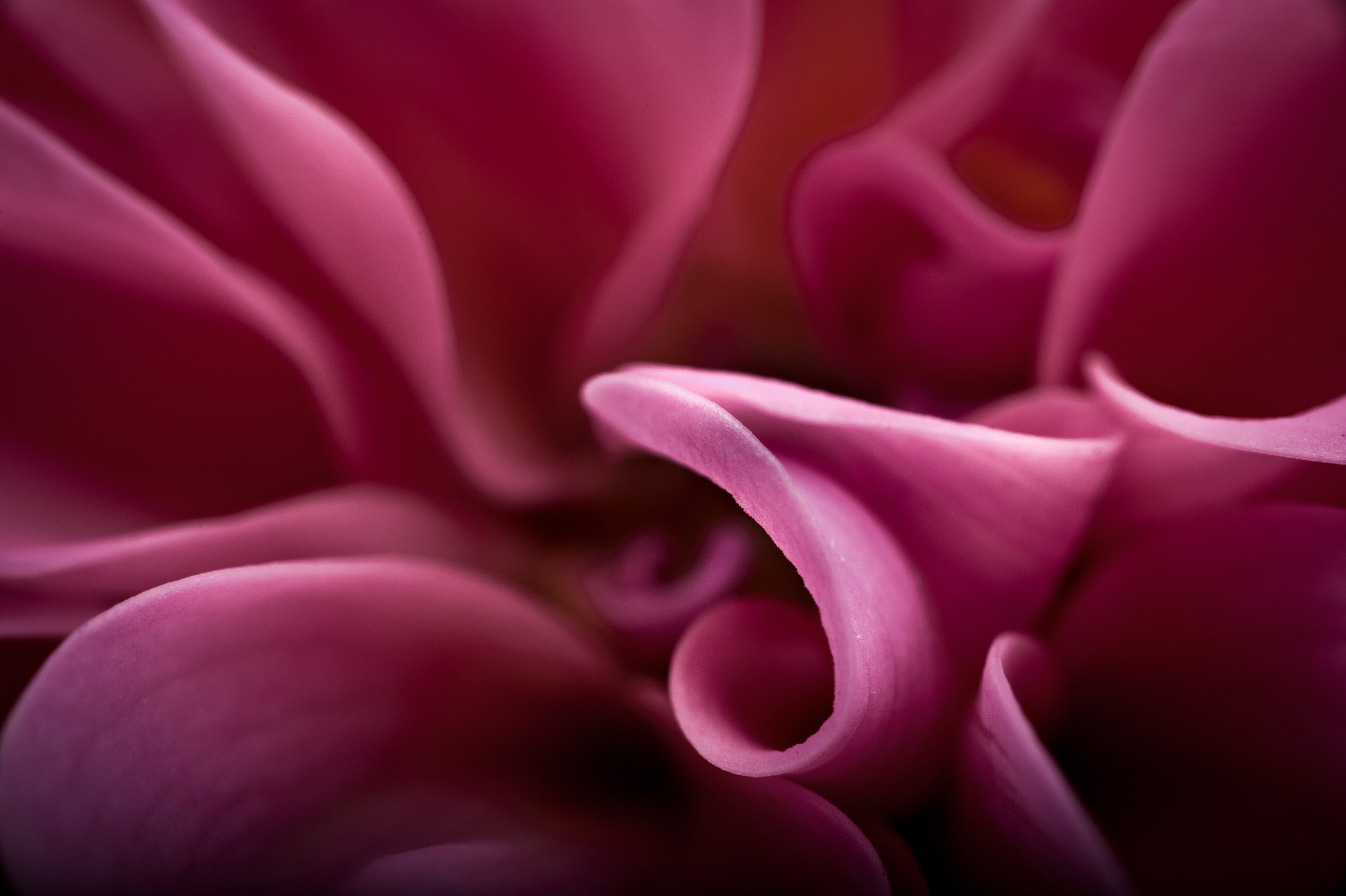 Photograph Tenderness in Pink by Artur Borzęcki on 500px